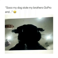 "Life, GoPro, and Girl Memes: ""Sooo my dog stole my brothers GoPro  and.."" I need a dog in my life"