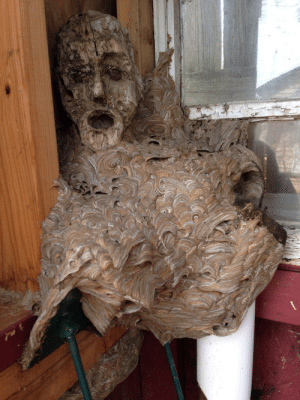 Head, Tumblr, and Blog: sophia-epistemia:  unexplained-events: Abandoned hornet's nest found in a shed. The head is a part of a wooden statue it fused with