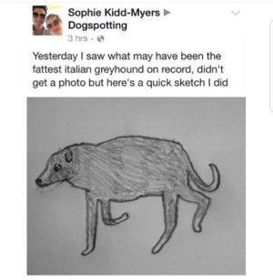 Saw, Record, and Kidd: Sophie Kidd-Myers  Dogspotting  3 hrs.  Yesterday I saw what may have been the  fattest italian greyhound on record, didn't  get a photo but here's a quick sketch I dic meirl
