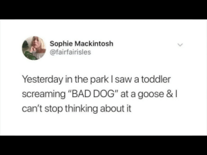 "Bad, Dank, and Memes: Sophie Mackintosh  @fairfairisles  Yesterday in the park I saw a toddler  screaming ""BAD DOG"" at a goose &I  can't stop thinking about it meirl by VarysIsAMermaid69 MORE MEMES"