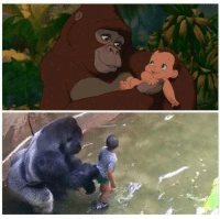 Sorry about the Harambe memes I have been posting lately, I'm just beating a dead horse: Sorry about the Harambe memes I have been posting lately, I'm just beating a dead horse
