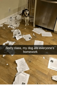 "<p>The tables have turned.</p><p>via <a href=""https://www.reddit.com/r/funny/comments/6t0uxn/the_tables_have_turned/"" target=""_blank"">@JF_112</a></p>: Sorry class, my dog ate everyone's  homework <p>The tables have turned.</p><p>via <a href=""https://www.reddit.com/r/funny/comments/6t0uxn/the_tables_have_turned/"" target=""_blank"">@JF_112</a></p>"