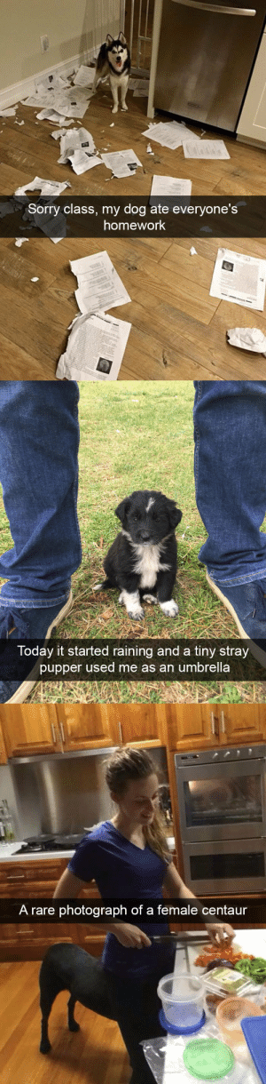 animalsnaps:Dog snaps: Sorry class, my dog ate everyone's  homework   Today it started raining and a tiny stray  pupper used me as an umbrella   A rare photograph of a female centaur animalsnaps:Dog snaps