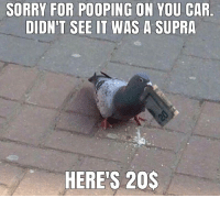 Cars, Supra, and Enthusiastic: SORRY FOR POOPING ON YOU CAR  DIDN'T SEE IT WAS A SUPRA  HERE'S 20$ Car enthusiast! Car memes
