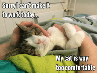 Sounds like a purrfect excuse to me! 😉 mondaytomorrow catstagram cats lifewithcats lovecats ilovemycat boredpanda thedailykitten dodo thedodo cat: Sorry I can't make it  to work today  My Cat is way  too comfortable  Facebook.com/MontyBoyCat Sounds like a purrfect excuse to me! 😉 mondaytomorrow catstagram cats lifewithcats lovecats ilovemycat boredpanda thedailykitten dodo thedodo cat