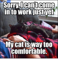 Tomorrow morning:: Sorry,lcantcome  in to workjustyet  My cat isway too  comfortable. Tomorrow morning: