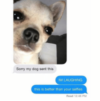 Funny, Lmao, and Sorry: Sorry my dog sent this  IM LAUGHING  this is better than your selfies  Read 12:46 PM Lmao 😂 (@hilarious.ted)