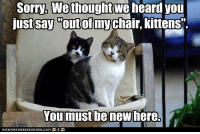 "Confused, Memes, and Sorry: Sorry, We thought  we  heard you  just say out of my  kittens"".  You must be new here. You must be confused."