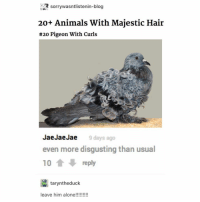 Animals, Love, and Tumblr: sorrywasntlisteni  n-blog  20+ Animals With Majestic Hair  #20 Pigeon With Curls  JaeJaeJae  even more disgusting than usual  10treply  9 days ago  taryntheduck also thanks @ajmeraki for making @orangefuzzysocks and i new profile pics we love them!!!