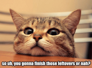 Food, Omg, and Tumblr: souh,you gonna finish those leftovers or nah? omg-images:  Spare some food?