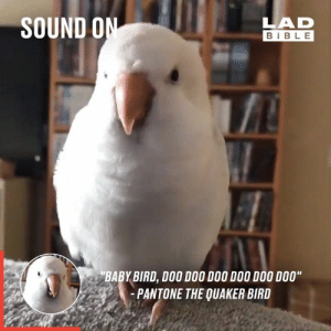 "Dank, Bible, and Baby: SOUND ON  LAD  BIBLE  BABY BIRD, DOO DOO DOO DOO DOO DO0""  -PANTONE THE QUAKER BIRD 'BABY BIRD, DOO DOO DOO DOO DOO DOO!' 😂🐦"