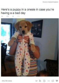 Bad Day, Memes, and Puppies: Source: babyanimalpics  Here's a puppy in a onesie in case you're  having a a bad day  244,786 notes ~GreenEyedDevil