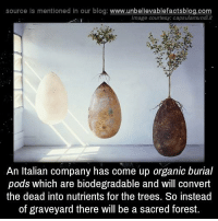 Memes, 🤖, and Forest: source Is mentioned In our blog  www.unbelievablefactsblog.com  image courtesy: capsulamundiit  An Italian company has come up organic burial  pods which are biodegradable and will convert  the dead into nutrients for the trees. So instead  of graveyard there will be a sacred forest.
