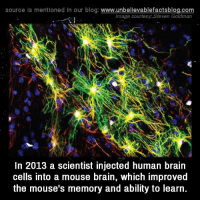 Memes, Mouse, and 🤖: source Is mentioned In our blog  www.unbelievablefactsblog.com  Image courtesy Steven Goldman  In 2013 a scientist injected human brain  cells into a mouse brain, which improved  the mouse's memory and ability to learn