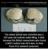 Minged: source Is mentioned In our blog  www.unbelievablefactsblog.com  Image credit: Bangor University  The oldest animal ever recorded was a  507-year-old mollusk called Ming. It died  because the British researchers who found  It didn't realize how old it was, so they  froze it for research purposes.