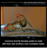 Memes, Blog, and Common: source Is mentioned In our blog  www.unbelievablefactsblog.com  Image credit TheAlphaWolf via wikimedia  Common fruit fly females prefer to mate  with their own brothers over unrelated males