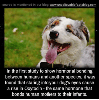 Memes, 🤖, and Bond: source Is mentioned In our blog  www.unbelievablefactsblog.com  In the first study to show hormonal bonding  between humans and another species, it was  found that staring into your dog's eyes cause  a rise in Oxytocin the same hormone that  bonds human mothers to their infants.