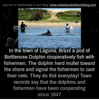 Laguna: source is mentioned in our blog  www.unbelievablefactsblog.com  In the town of Laguna, Brazil a pod of  Bottlenose Dolphin cooperatively fish with  fishermen. The dolphin herd mullet toward  the shore and signal the fishermen to cast  their nets. They do this everyday! Town  records say that the dolphins and  fishermen have been cooperating  since 1847.