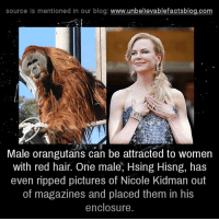 red hairing: source is mentioned in our blog  www.unbelievablefactsblog.com  Male orangutans can be attracted to women  with red hair. One male, Hsing Hisng, has  even ripped pictures of Nicole Kidman out  of magazines and placed them in his  enclosure