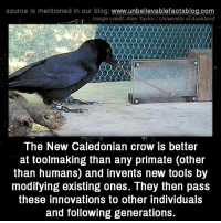 Memes, Blog, and Image: source Is mentioned in our blog: www.unbellevablefactsblog.co  , Image credit: Alex Taylor/ University ofAuckland  The New Caledonian crow is better  at toolmaking than any primate (otheir  than humans) and invents new tools by  modifying existing ones. They then pass  these innovations to other individuals  and following generations.