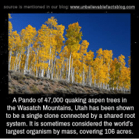 Memes, Aspen, and Blog: source is mentioned in our blog: www.unbellevablefactsblog.com  A Pando of 47,000 quaking aspen trees in  the Wasatch Mountains, Utah has been shown  to be a single clone connected by a shared root  system. It is sometimes considered the world's  largest organism by mass, covering 106 acres.