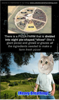 """This pizza farm will blow your mind!: source Is mentioned in our blog:  www.unbellevablefactsblog.com  Herbs  Wheat  There is a PIZZA FARM that is divided  into eight pie-shaped """"slices"""" (like a  giant pizza) and grows or grazes all  the ingredients needed to make a  farm fresh pizza! This pizza farm will blow your mind!"""