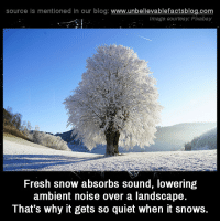 unbelievable-facts:Fresh snow absorbs sound, lowering ambient noise over a landscape. That's why it gets so quiet when it snows.: source is mentioned in our blog: www.unbellevablefactsblog.com  Image courtesy: Pixabay  Fresh snow absorbs sound, lowering  ambient noise over a landscape  That's why it gets so quiet when it snows. unbelievable-facts:Fresh snow absorbs sound, lowering ambient noise over a landscape. That's why it gets so quiet when it snows.