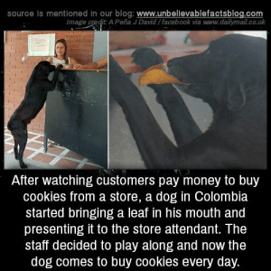 "unbelievable-facts: ""After watching customers pay money to buy cookies from a store, a dog in Colombia started bringing a leaf in his mouth and presenting it to the store attendant. The staff decided to play along and now the dog comes to buy cookies...: source is mentioned in our  blog: www.unbellevablefactsblog.com  Image credit: A Peña J David/facebook via www.dailymail.co.uk  After watching customers pay money to buy  cookies from a store, a dog in Colombia  started bringing a leaf in his mouth and  presenting it to the store attendant. The  staff decided to play along and now the  dog comes to buy cookies every day. unbelievable-facts: ""After watching customers pay money to buy cookies from a store, a dog in Colombia started bringing a leaf in his mouth and presenting it to the store attendant. The staff decided to play along and now the dog comes to buy cookies..."