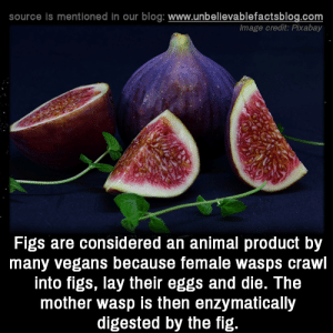Memes, Animal, and Blog: source is mentioned in our blog: www.unbellevablefactsblog.com  Image credit: Pixabay  Figs are considered an animal product by  many vegans because female wasps crawl  into figs, lay their eggs and die. The  mother wasp is then enzymatically  digested by the fig.
