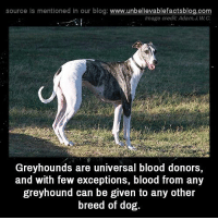 Memes, Blog, and 🤖: source Is mentioned in our blog: www.unbellevablefactsblog.com  lmage credit: Adam.J.W.C  vi  Greyhounds are universal blood donors,  and with few exceptions, blood from any  greyhound can be given to any other  breed of dog.