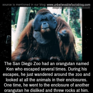 San Diego: source is mentioned in our blog: www.unbellevablefactsblog.com  serbble88  The San Diego Zoo had an orangutan named  Ken who escaped several times. During his  escapes, he just wandered around the zoo and  looked at all the animals in their enclosures  One time, he went to the enclosure of another  orangutan he disliked and threw rocks at him