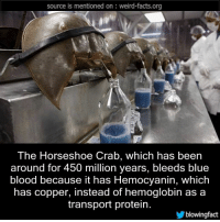 source is mentioned on weiro-facts.org  The Horseshoe Crab, which has been  around for 450 million years, bleeds blue  blood because it has Hemocyanin, which  has copper, instead of hemoglobin as a  transport protein.  blowing fact