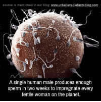 Memes, Blog, and Planets: source ls mentioned in our blog  www.unbelievablefactsblog.com  A single human male produces enough  sperm in two weeks to impregnate every  fertile woman on the planet.