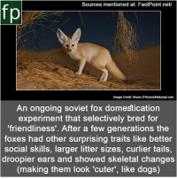 Dogs, Memes, and youtube.com: Sources mentioned at: FactPoint.net/  fp  Bruno D'Amicis /Naturept.com  Image Credit: Bruno D'Amicis/Naturepl.com  An ongoing soviet fox domestication  experiment that selectively bred for  friendliness'. After a few generations the  foxes had other surprising traits like better  social skills, larger litter sizes, curlier tails,  droopier ears and showed skeletal changes  (making them look 'cuter', like dogs) Subscribe to our YouTube channel: youtube.com-FactPoint check Source at : FactPoint.net- Or check this link:http:-www.bbc.com-earth-story-20160912-a-soviet-scientist-created-the-only-tame-foxes-in-the-world