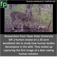 Subscribe to our YouTube channel: youtube.com-FactPoint check Source at : FactPoint.net- Or check this link: https:-www.ibtimes.co.uk-see-deer-eating-human-first-time-recorded-history-1620955: Sources mentioned at: FactPoint.net/  fp  Researchers from Texas State University  left a human corpse on a 26-acre  woodland site to study how human bodies  decompose in the wild. They ended up  capturing the first image of a deer eating  human remains. Subscribe to our YouTube channel: youtube.com-FactPoint check Source at : FactPoint.net- Or check this link: https:-www.ibtimes.co.uk-see-deer-eating-human-first-time-recorded-history-1620955