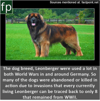 Dogs, Memes, and Wikipedia: Sources mentioned at: factpoint.net  The dog breed, Leonberger were used a lot in  both World Wars in and around Germany. So  many of the dogs were abandoned or killed in  action due to invasions that every currently  living Leonberger can be traced back to only 8  that remained from wWII. Subscribe to our YouTube channel: youtube.com-FactPoint check Source at : Factpoint.net- Or check this link: https:-en.wikipedia.org-wiki-Leonberger