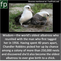 Animals, Memes, and News: Sources mentioned at: FactPoint.net/  Wisdom-the world's oldest albatross who  reunited with the man who first tagged  her in 1956. Having spent 40 years apart,  Chandler Robbins picked her up by chance  among a colony of more than 250,000 nests  and discovered she'd also become the oldest  albatross to ever give birth to a chick. Subscribe to our YouTube channel: youtube.com-FactPoint check Source at : FactPoint.net- Or check this link: https:-news.nationalgeographic.com-news-2013-02-130221-birds-albatrosses-oldest-wisdom-midway-science-animals-