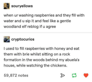 Elf, Tumblr, and Formation: souryellows  when ur washing raspberries and they fill with  water and u sip it and feel like a gentle  woodland elf reblog if u agree  cryptocurios  I used to fill raspberries with honey and eat  them with brie whilst sitting on a rock  formation in the woods behind my  abuela's  house, while watching the chickens.  59,872 notes Raspberries