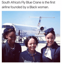 Memes, Black, and Blue: South Africa's Fly Blue Crane is the first  airline founded by a Black woman