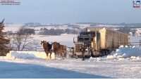 Santa's sleigh would be no match for these Belgian draft horses! They pulled a semi and trailer up a steep, icy driveway in southern Minnesota last week. The horses are reportedly bred and trained for this kind of work and were unharmed.: Southern Minnesota  OX  EWS  Lizzie Hershberger via Storyful Santa's sleigh would be no match for these Belgian draft horses! They pulled a semi and trailer up a steep, icy driveway in southern Minnesota last week. The horses are reportedly bred and trained for this kind of work and were unharmed.