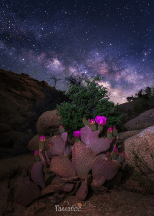 space-pics:  Desert Bloom [OC] Joshua Tree, Ca: space-pics:  Desert Bloom [OC] Joshua Tree, Ca