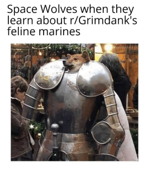 Marines, Space, and Wolves: Space Wolves when they  learn about r/Grimdank's  feline marines This town ain't big enough for two furry factions