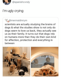 Brains, Crying, and Dogs: @spanishcvndy  i'm ugly crying  w@mermaidmrym  scientists are actually studying the brains of  dogs & what the studies show is not only do  dogs seem to love us back, they actually see  us as their family. It turns out that dogs rely  on humans more than they do their own kind  for affection, protection and everything in  between  90 Mind blown