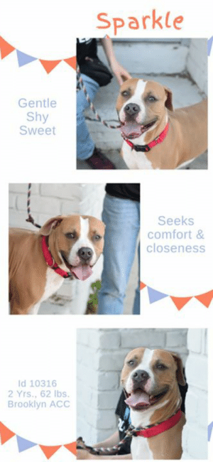 Beautiful, Dogs, and Family: Sparkle  Gentle  Shy  Sweet  Seeks  comfort&  closeness  Id 10316  2 Yrs., 62 lbs.  Brooklyn ACC INTAKE DATE – 6/5/2019   So sweet, so shy, so singularly beautiful, SPARKLE looks like a duck out of water at the shelter.  Her beauty is ethereal.  Her stunning coloring, her kohl rimmed eyes, her gentleness of heart and spirit.  She is simply lovely, inside and out, and she desperately wants to be back in a family home where she is loved, adored, and feels safe.  Instead, she cuddles up behind a volunteer on a city stoop, seeking comfort.  You see, this is not her first time at the shelter.  Sparkle has been here before, not so very long ago, and she had hoped to never see this place again.  Her heart hurts, and she wonders why the family who chose her, chose to send her back.   Let's get Sparkle out of the shelter before she ends up sick and on the list to die.  Message our page or email us at MustLoveDogsNYC@gmail.com for assistance fostering or adopting Sparkle.  MY MOVIE: Sparkle ~ https://youtu.be/ECpa0-lkqJ8   SPARKLE, ID# 10316, 2 yrs old, 62 lbs, Unaltered Female Brooklyn ACC, Large Mixed Breed, Brown / White    Owner Surrender Reason:  Shelter Assessment Rating:  LEVEL 3 Medical Behavior Rating:  2. Blue  *** TO FOSTER OR ADOPT ***    If you would like to adopt a NYC ACC dog, and can get to the shelter in person to complete the adoption process, you can contact the shelter directly. We have provided the Brooklyn, Staten Island and Manhattan information below. Adoption hours at these facilities is Noon – 8:00 p.m. (6:30 on weekends)  If you CANNOT get to the shelter in person and you want to FOSTER OR ADOPT a NYC ACC Dog, you can PRIVATE MESSAGE our Must Love Dogs page for assistance. PLEASE NOTE: You MUST live in NY, NJ, PA, CT, RI, DE, MD, MA, NH, VT, ME or Northern VA. You will need to fill out applications with a New Hope Rescue Partner to foster or adopt a NYC ACC dog. Transport is available if you live within the prescribed range of states.  Shelter contact information: Phone number (212) 788-4000 Email adopt@nycacc.org  Shelter Addresses: Brooklyn Shelter: 2336 Linden Boulevard Brooklyn, NY 11208 Manhattan Shelter: 326 East 110 St. New York, NY 10029 Staten Island Shelter: 3139 Veterans Road West Staten Island, NY 10309  *** NEW NYC ACC RATING SYSTEM ***  Level 1 Dogs with Level 1 determinations are suitable for the majority of homes. These dogs are not displaying concerning behaviors in shelter, and the owner surrender profile (where available) is positive.    Level 2  Dogs with Level 2 determinations will be suitable for adopters with some previous dog experience. They will have displayed behavior in the shelter (or have owner reported behavior) that requires some training, or is simply not suitable for an adopter with minimal experience.    Level 3 Dogs with Level 3 determinations will need to go to homes with experienced adopters, and the ACC strongly suggest that the adopter have prior experience with the challenges described and/or an understanding of the challenge and how to manage it safely in a home environment. In many cases, a trainer will be needed to manage and work on the behaviors safely in a home environment.
