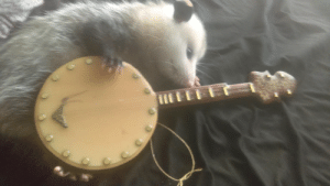 Tumblr, Blog, and Http: sparklezoid: Play us a tune, banjo man