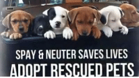"Boxing, Homeless, and Memes: SPAY & NEUTER SAVES LIVES  ADOPT RESCUED PETS Donations Are Needed PLEASE *SHARE* With Your Animal Loving Friends💕  Please Help ""A Place To Bark"" continue on,  Saving The Lives Of Homeless Pets!   We are in need of a new furnace, windows for our shelter, new kennels, dog house & many other things.  Our shelter has been well loved, saving hundreds of homeless pets, every year.  To donate via Paypal: paypal.me/aplacetobark To Donate By mail:  ""A Place To Bark"" PO Box 649 Portland, TN 37148 Or Donations can be made directly to the vet's office: GALLATIN Animal Hospital 338 Sumner Hall Dr Gallatin, TN  37066 ‭(615) 206-0145‬ Please ask they apply donation to ""A Place To Bark's medical fund.  Thank You for your donations!  We want to continue on another 17 years:) #givingtuesday #everylifematters #aplacetobark"