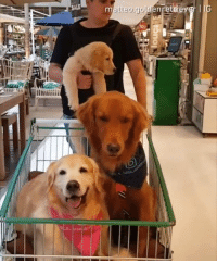 speaking of buying the essentials  By  matteo.goldenretriever | IG: speaking of buying the essentials  By  matteo.goldenretriever | IG