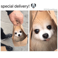 """Ass, Bless Up, and Blessed: special delivery! :  @DrSmashlove """"Uh, hi. Postmates? Is this Postmates? Yes I'd like to order a pupperino. No sir. Not a pepperoni do I look like I eat pizza bih I'm done with carbs, I said pupperino. Yes, from a shelter. Yes please, I proudly AdoptDontShop. What chu mean what kind. FIND ME ONE WHO LOOK LIKE HE NEED A LOT OF LOVE AND BRING HIS ASS, THIS CALL ALREADY TAKING TOO LONG AND U PUTTING YOUR TIP IN JEOPARDY, ENUF LONG TALKING BLESS UP THANK YOU."""" 😂😂😂"""