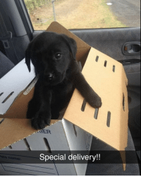 Memes, 🤖, and One: Special delivery!!  ets name @sobasicicanteven is one of my favourite accounts right now 👌