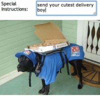 What else is better than hilarious dog memes?  http://bit.ly/2HgRBSU: Special  Instructions: boy  send your cutest delivery What else is better than hilarious dog memes?  http://bit.ly/2HgRBSU